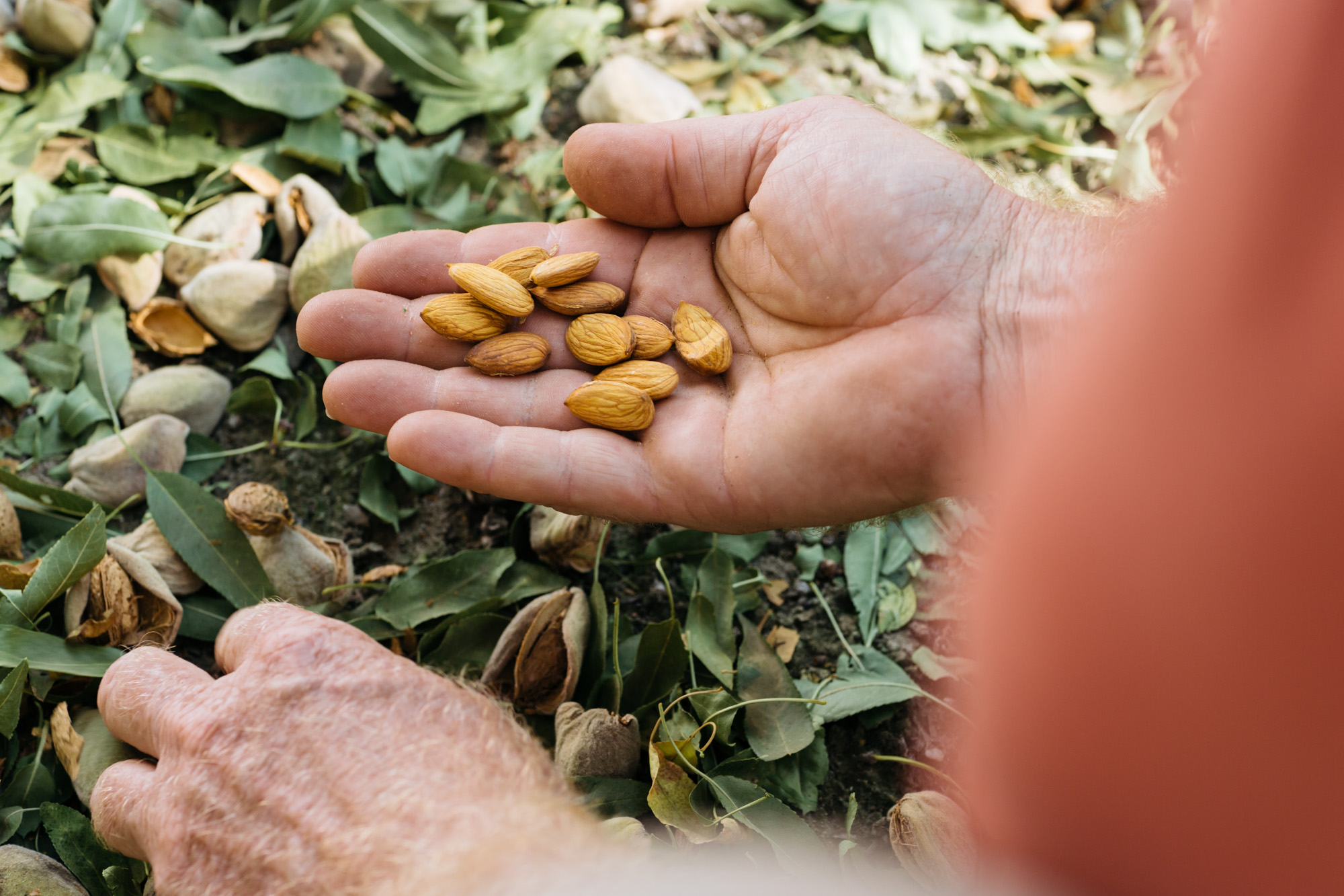 almond-farmer-food-growers-photographers